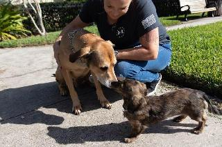 Dog Boarding in Orlando, Orlando | Meghan's Pet Services Orlando |  PetBacker Home Pet Hotel