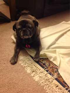 Charlene, Pet Boarder in Los Angeles