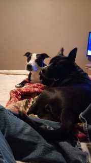 Jennifer, Pet Sitter in Munford