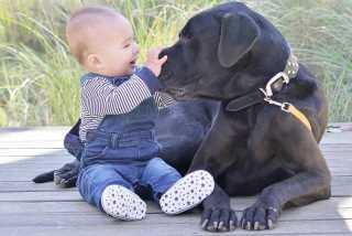Samantha, Pet Boarder in Blackett