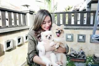 Peach, Pet Boarder in Petaling Jaya