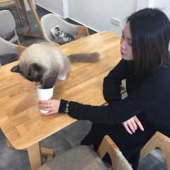Cici, Pet Sitter in 友諾士