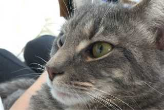Jessica, Pet Sitter in Pomfret