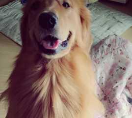 朱, Pet Boarder in Wuhan
