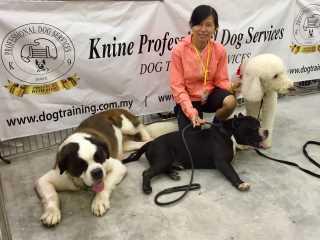 Foong, Pet Driver in Petaling Jaya
