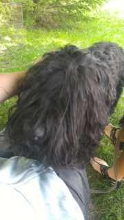Lera And Vanjas Pet Care.