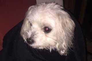bryan, Pet Boarder in Lexington