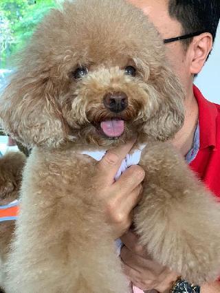 Pet Hotel Home Pet Boarding In Sunrise Avenue Seletar