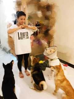 Winnie, Pet Boarder in Tai Po