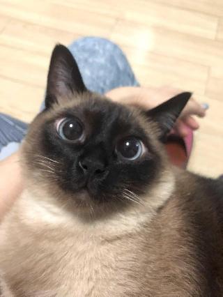 Ms.Fragile, Pet Boarder in 上海市