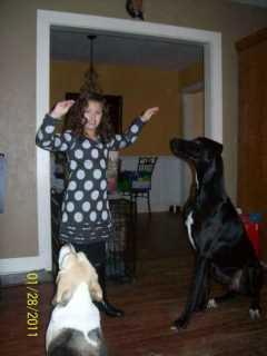 Brandy, Pet Walker in Rogers