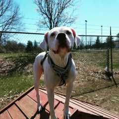 Rebekah, Pet Boarder in Lewisburg