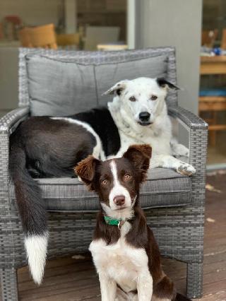 Sophie, Pet Driver in Glen Iris
