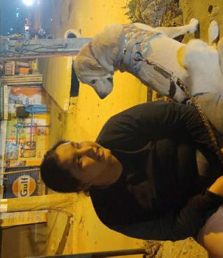sk, Pet Sitter in Bengaluru