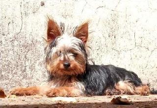 Adri, Pet Sitter in Pretoria