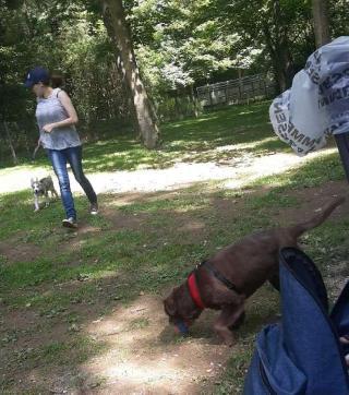jacqueline, Pet Sitter in Strassen