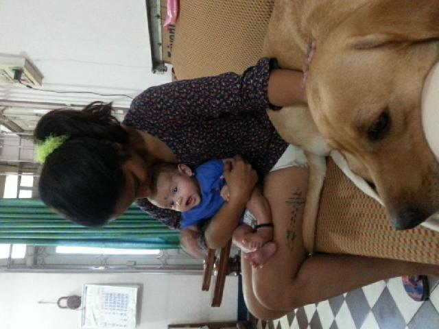 pet sitter in mumbai mira bhayandar kelly 39 s pet sitting petbacker maharashtra. Black Bedroom Furniture Sets. Home Design Ideas