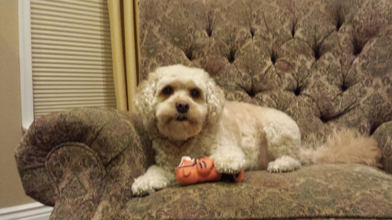 top recommended pet sitters in franklin township. Black Bedroom Furniture Sets. Home Design Ideas